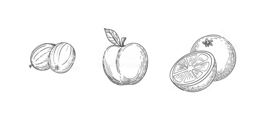 sketching fruits